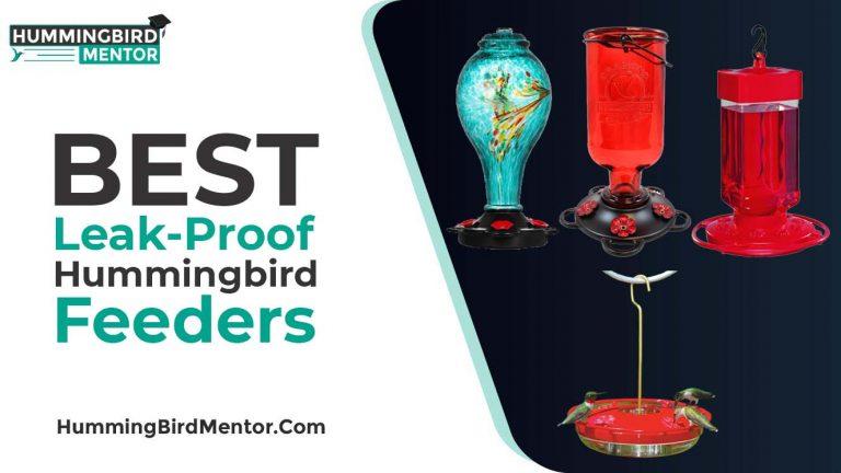 The 5 Best Leak-Proof Hummingbird Feeders 2021 by hummingbird Mentor