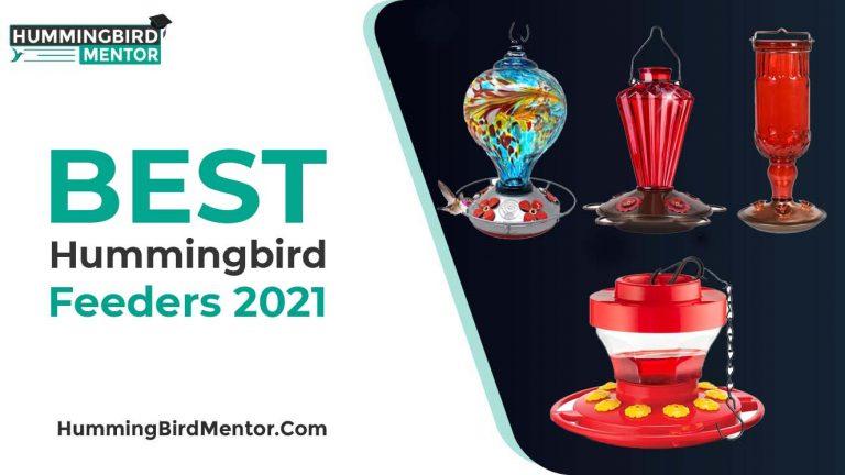 The 10 Best Hummingbird Feeders 2021 By Hummingbird Mentor
