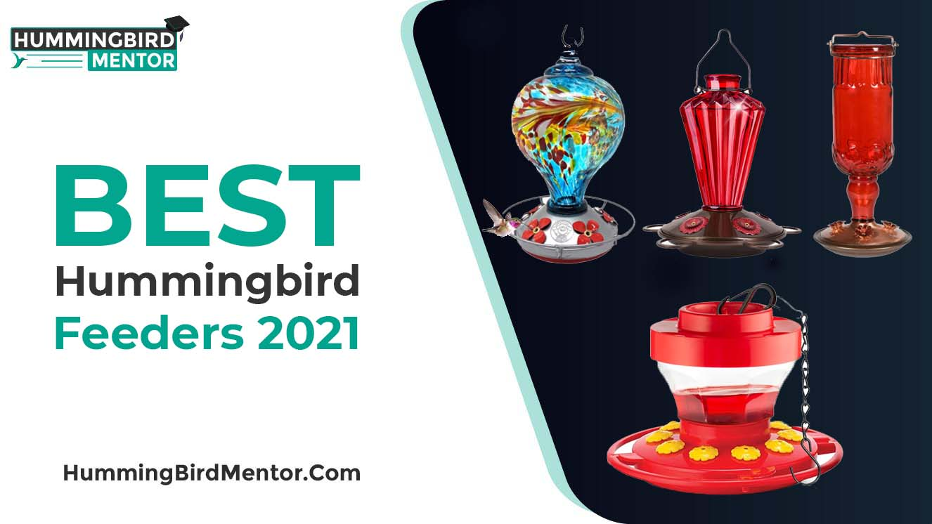 Best hummingbird feeders 2021