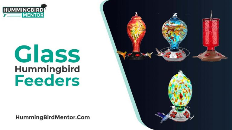 The 5 Best Glass Hummingbird Feeders 2021 by Hummingbird Mentor