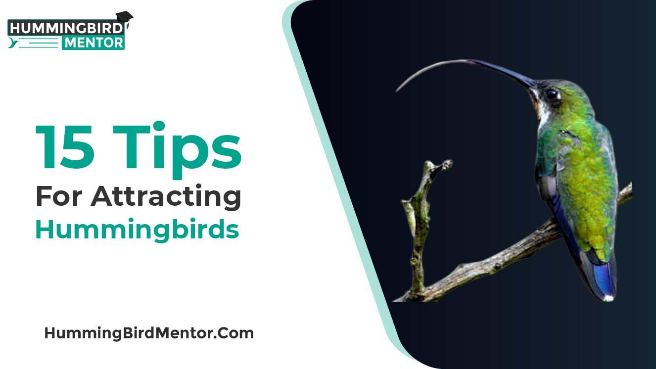 15 tips for attracting hummingbirds
