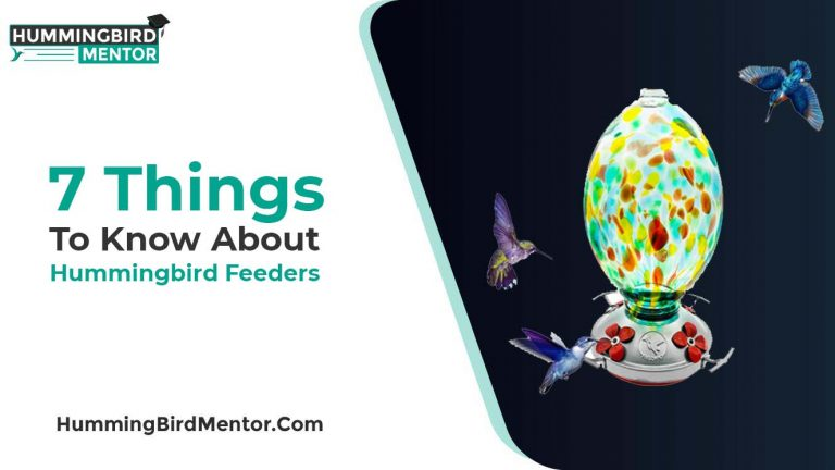 7 important Things to know about Hummingbird feeders