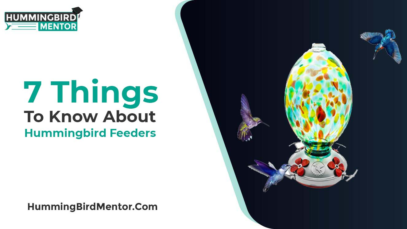 7 thnigs to know about hummingbird feeders