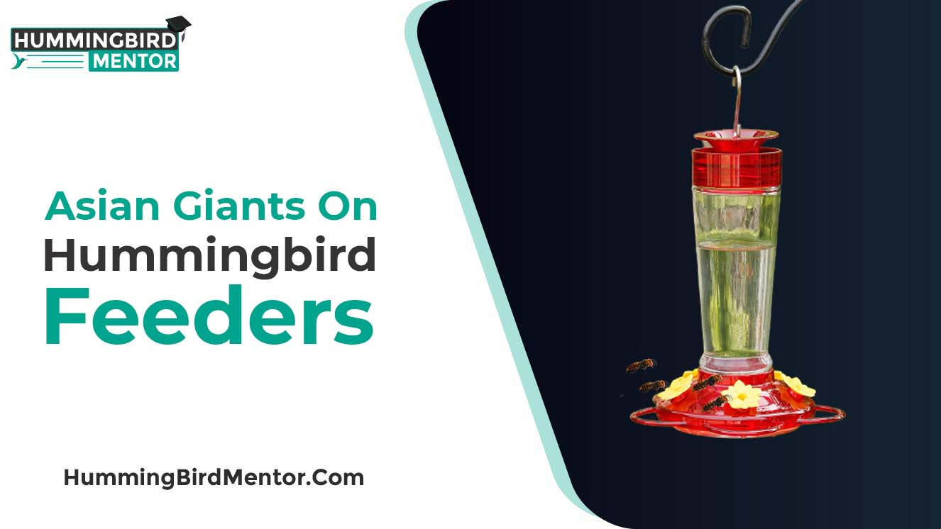 Asian Giants on Hummingbird feeders