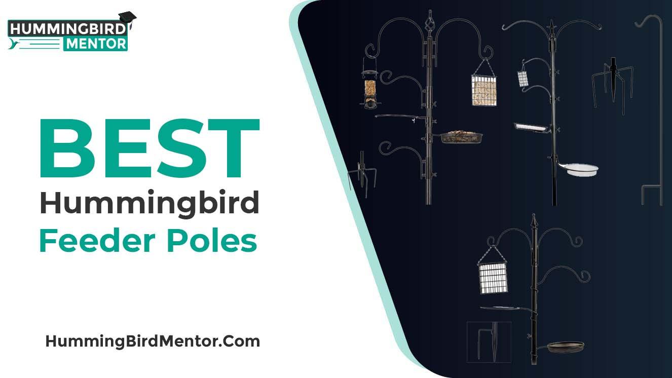 Best hummingbird feeder poles