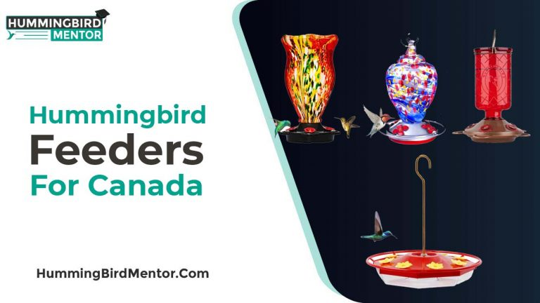 The 5 Best Hummingbird Feeders for Canada 2021 by Hummingbird Mentor