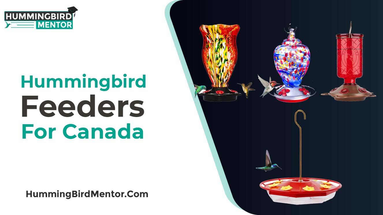 Best hummingbird feeders for Canada2021