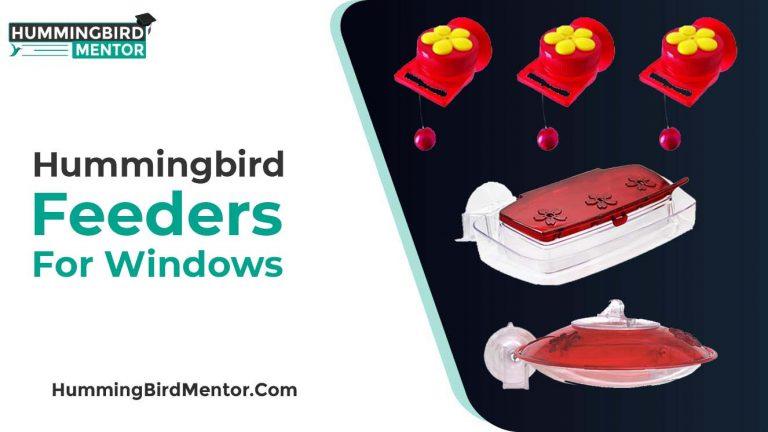 The 5 Best Hummingbird Feeders for Windows 2021 by hummingbird Mentor