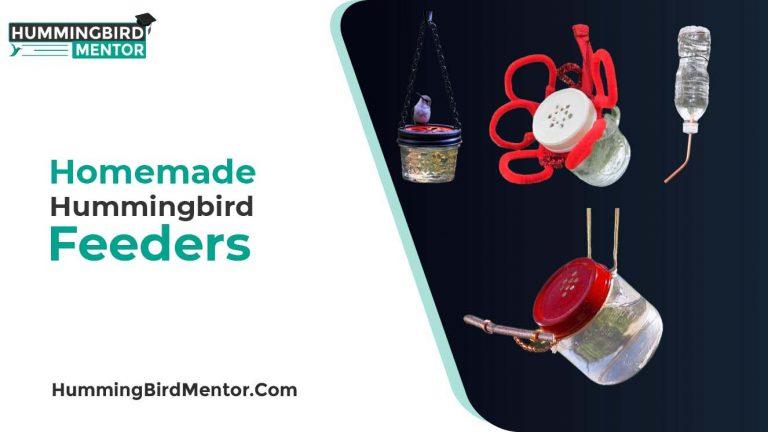 12 Homemade Hummingbird Feeders DIY Ideas by Hummingbird Mentor