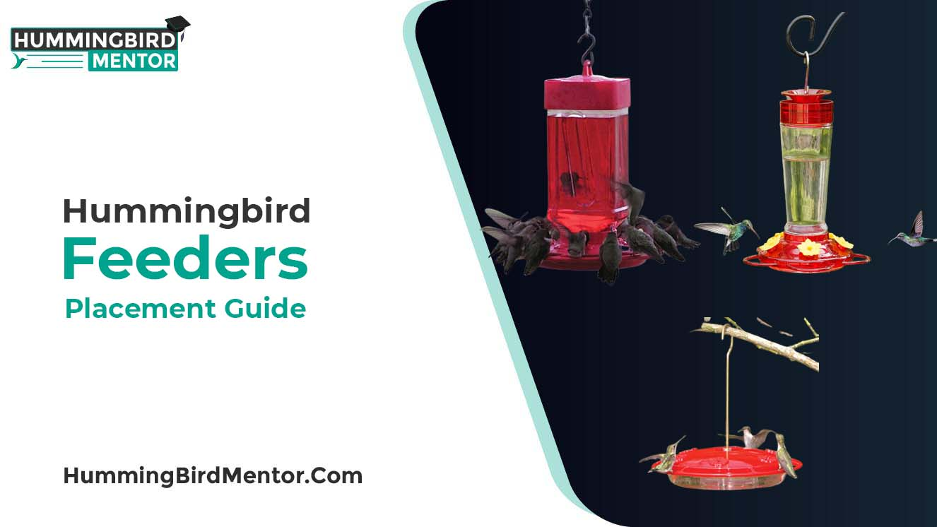 Hummingbird feeders placement guide