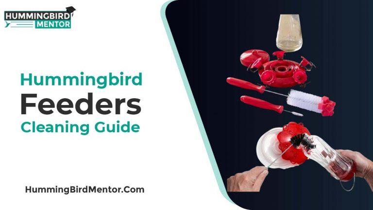 Hummingbird Feeder Cleaning Guide by Hummingbird Mentor