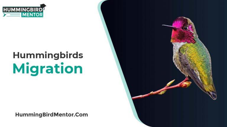 Hummingbird Migration Guide by Hummingbird Mentor
