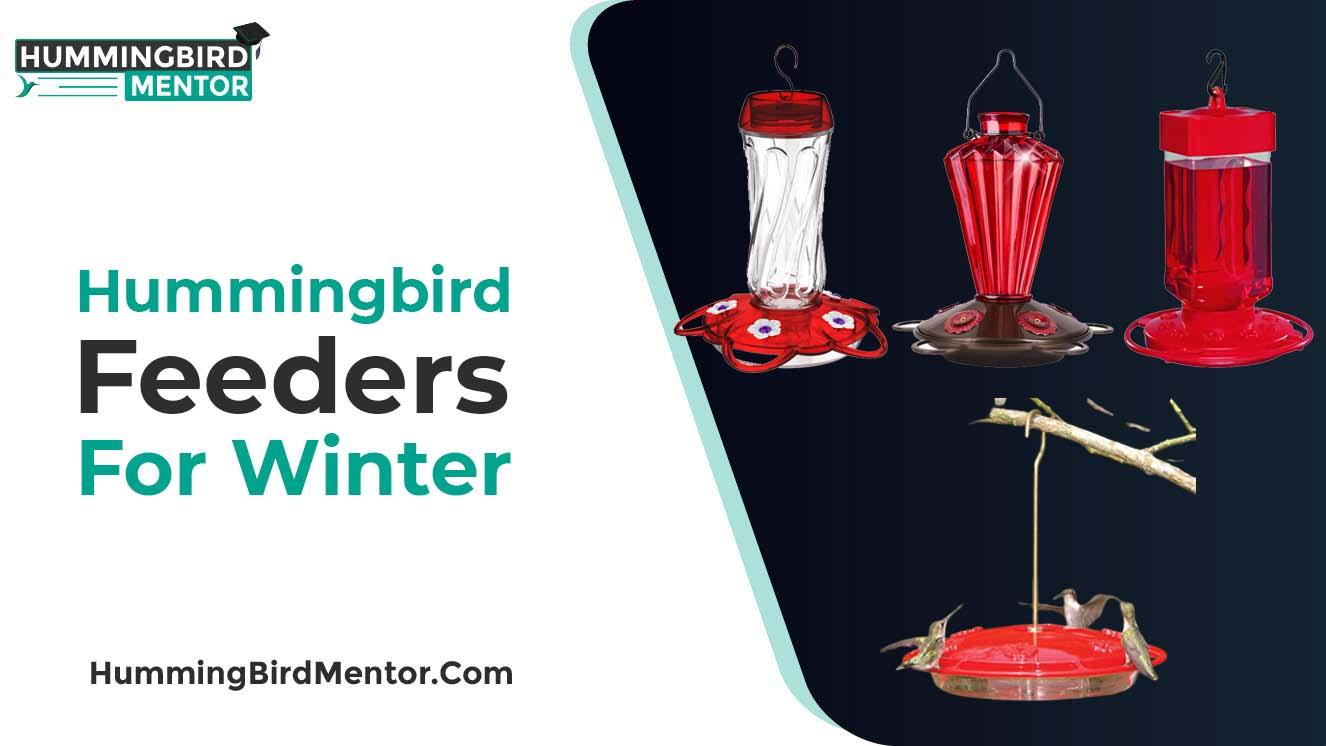 hummingbirrd feeder for winter 2021
