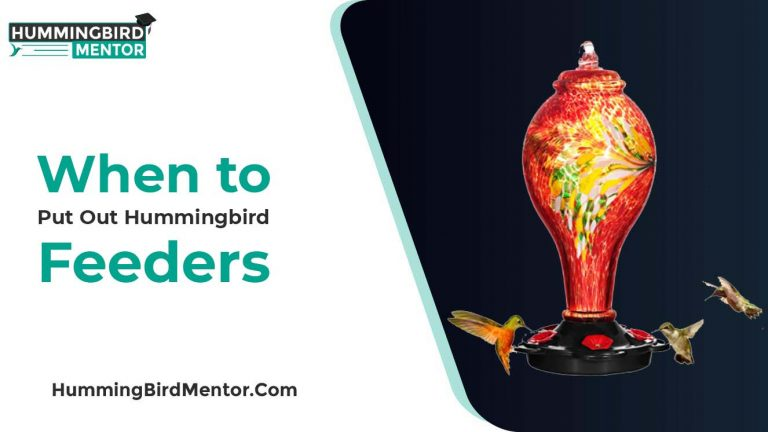 When to put out the Hummingbird Feeders? by Hummingbird Mentor